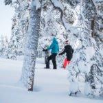 Kaksi hiihtäjää metsäladulla.